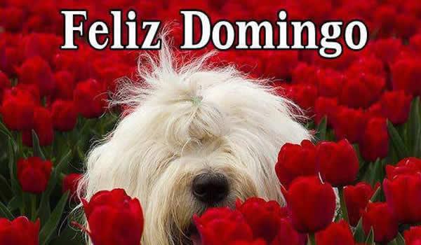 Imagenes De Rosas Y Flores Bonitas Consejosdeldiacom
