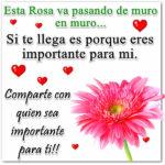 Fotos bonitas de rosas para ti
