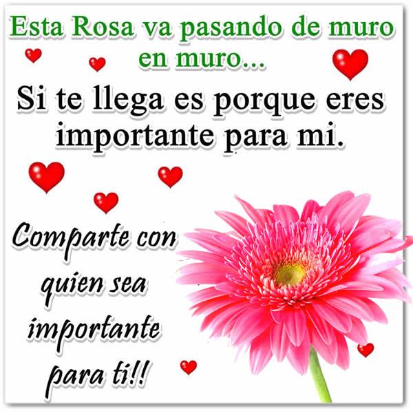 Fotos Bonitas De Rosas Para Ti Consejosdeldiacom