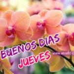 Frases con Mensajes de Buenos Dias Jueves