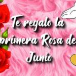 Te regalo la primera Rosa de Junio 2021 con imagenes bonitas